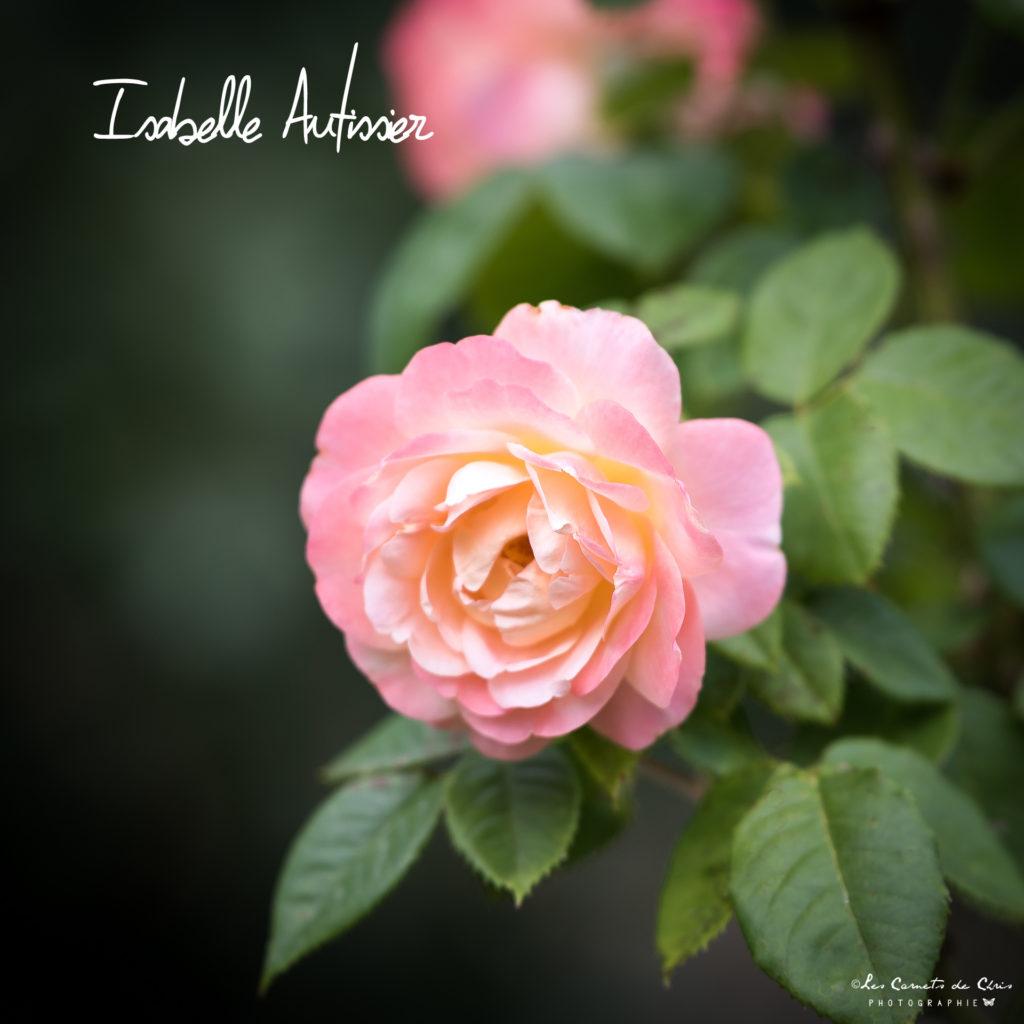 Rosier Isabelle Autissier